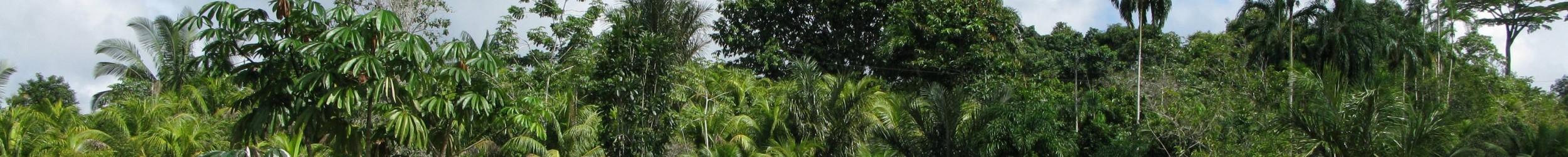 Tropisch Amazone bos 3 banner