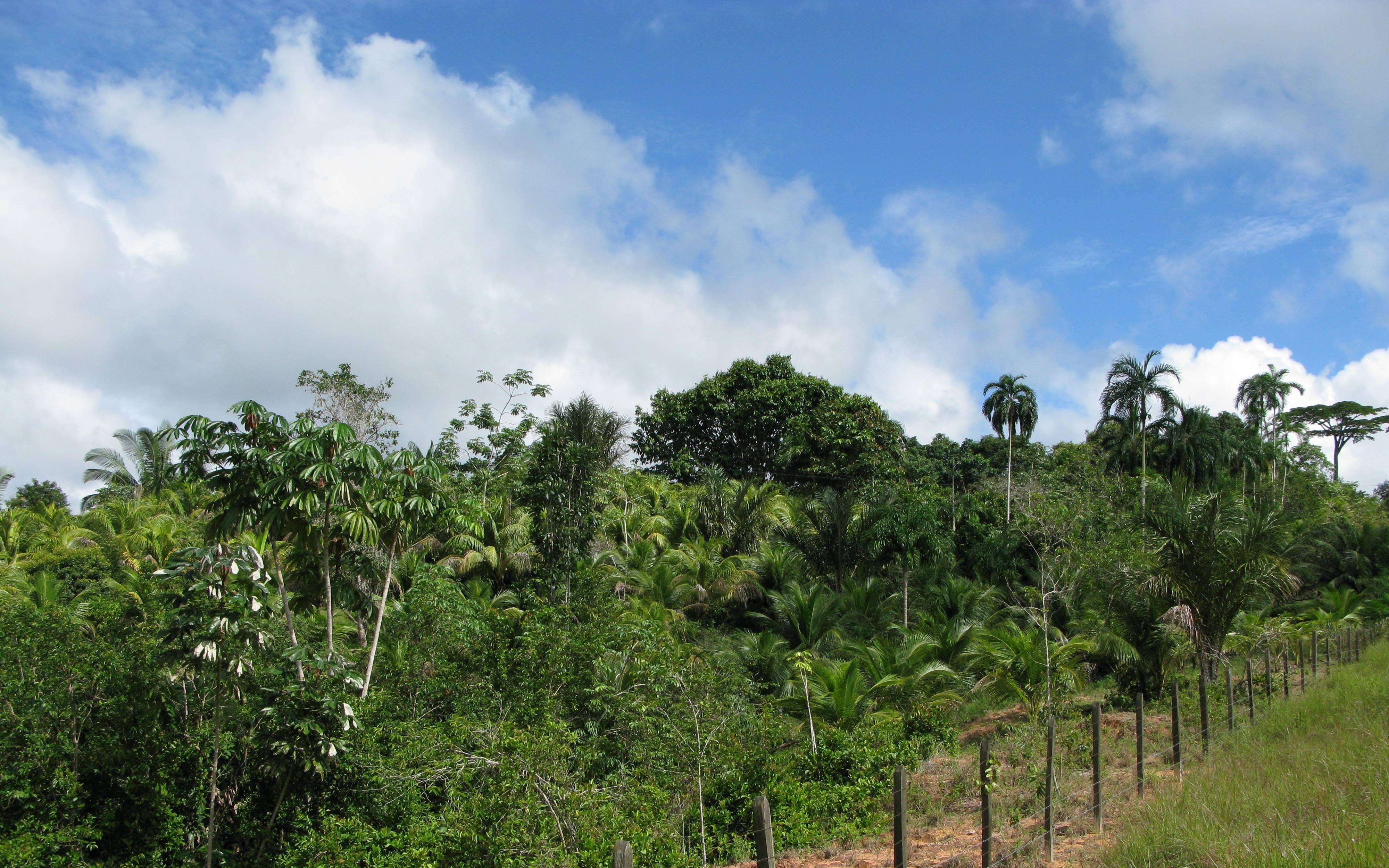 FSC tropisch bos in de Amazone