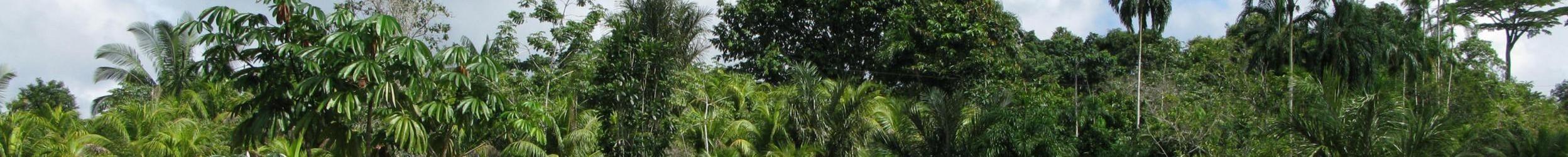 Houttrack helpt bedrijven tropische wouden legaal (en duurzaam) te beheren