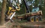 Super efficiente houtoogst in Nederlandse bossen